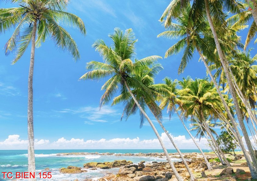 Tranh cảnh biển 155