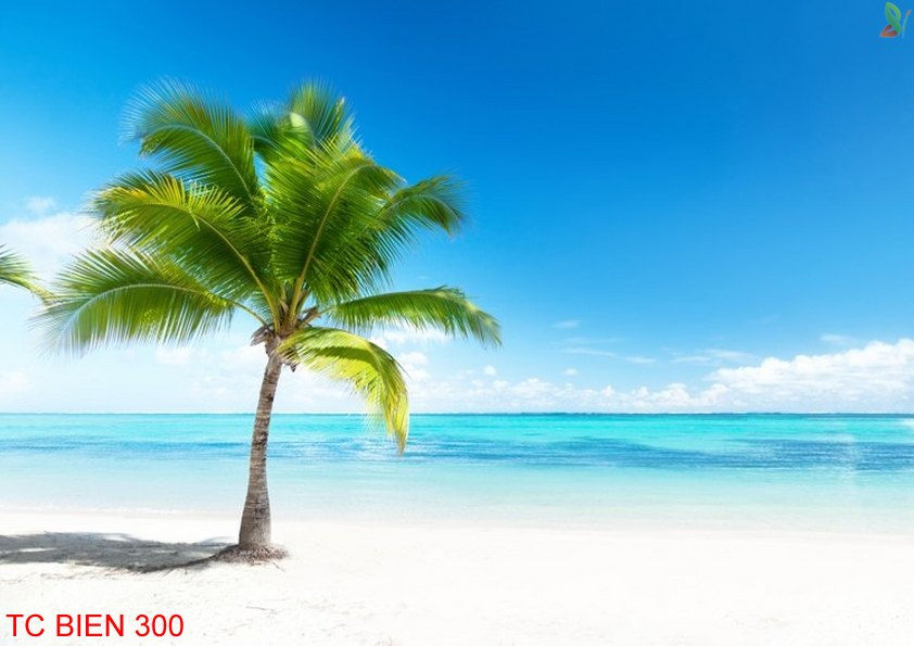 Tranh cảnh biển 300