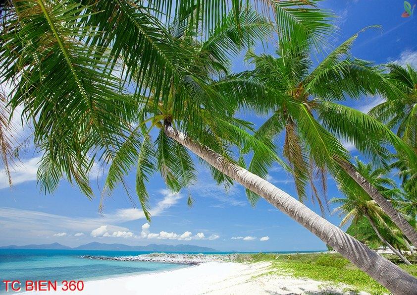 Tranh cảnh biển 360