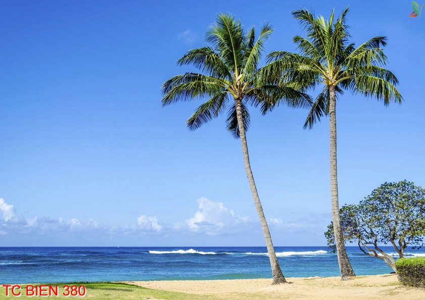Tranh cảnh biển 380