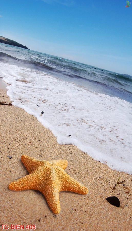 Tranh cảnh biển 408