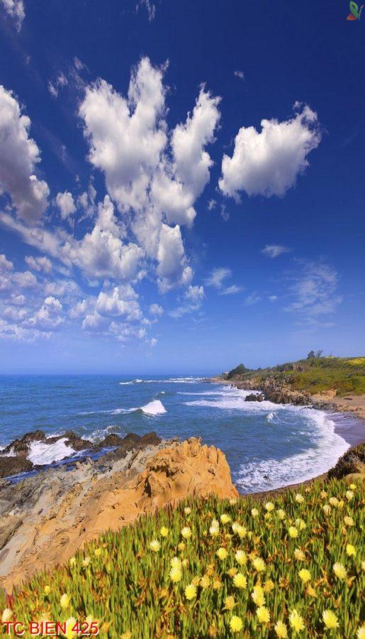 Tranh cảnh biển 425