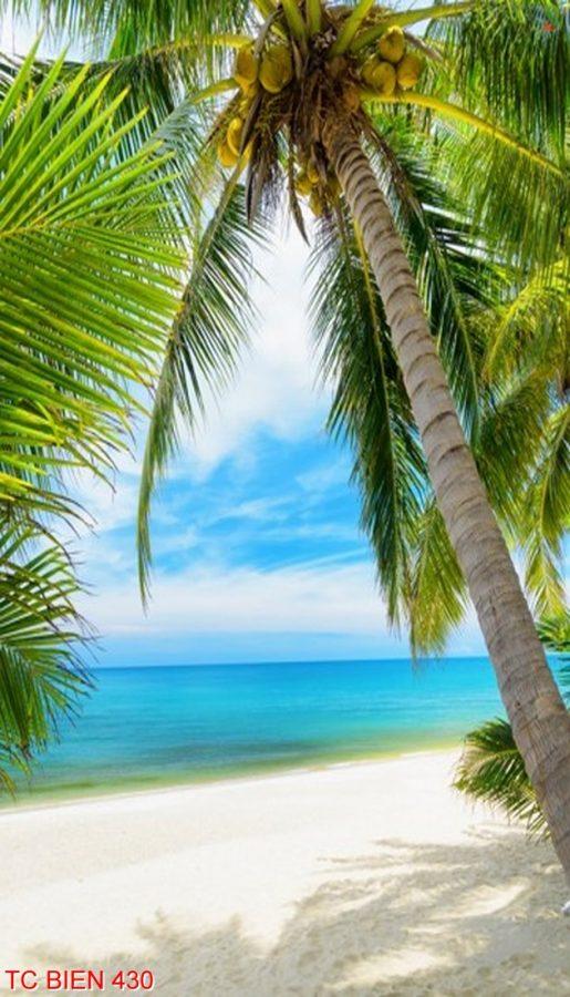 Tranh cảnh biển 430