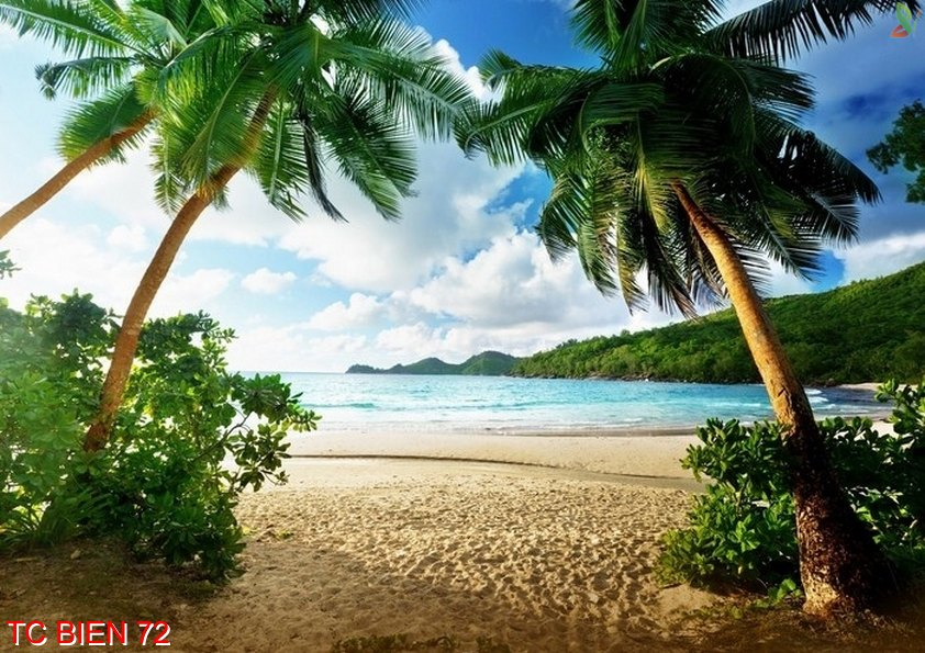 Tranh cảnh biển 72