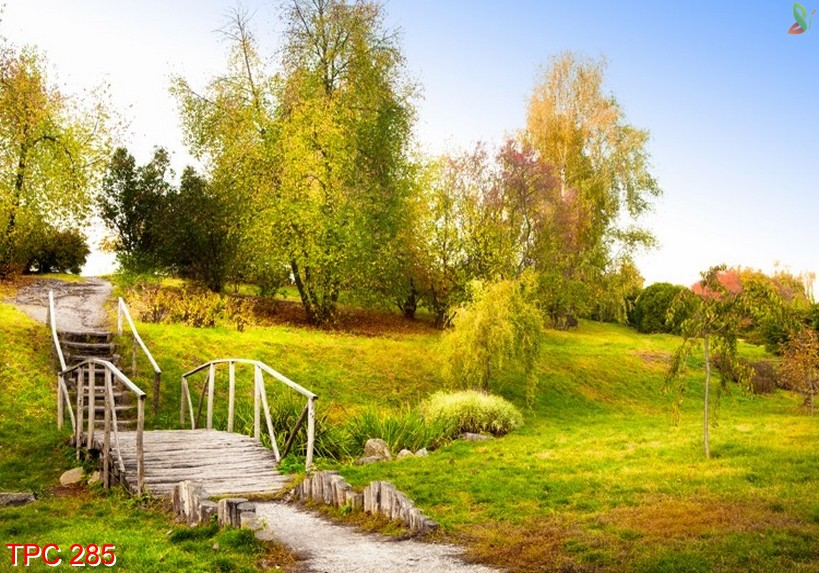 Tranh phong cảnh 285