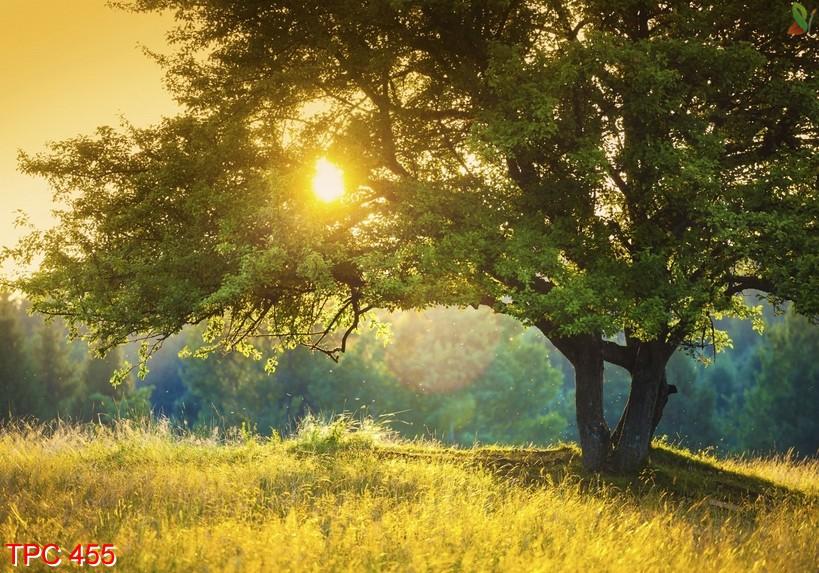 Tranh phong cảnh 455