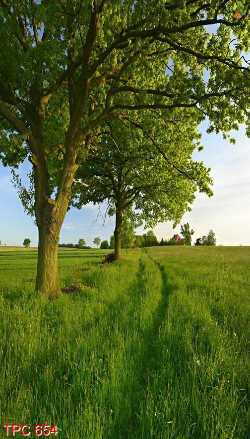 Tranh phong cảnh 654