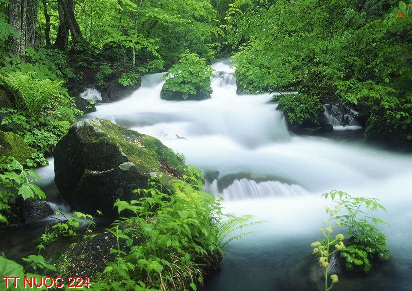 Tranh thác nước 224