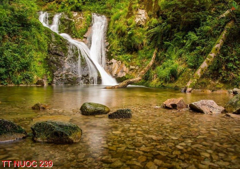 Tranh thác nước 239