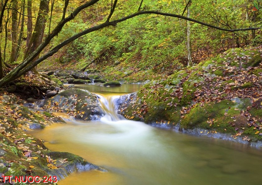 Tranh thác nước 243