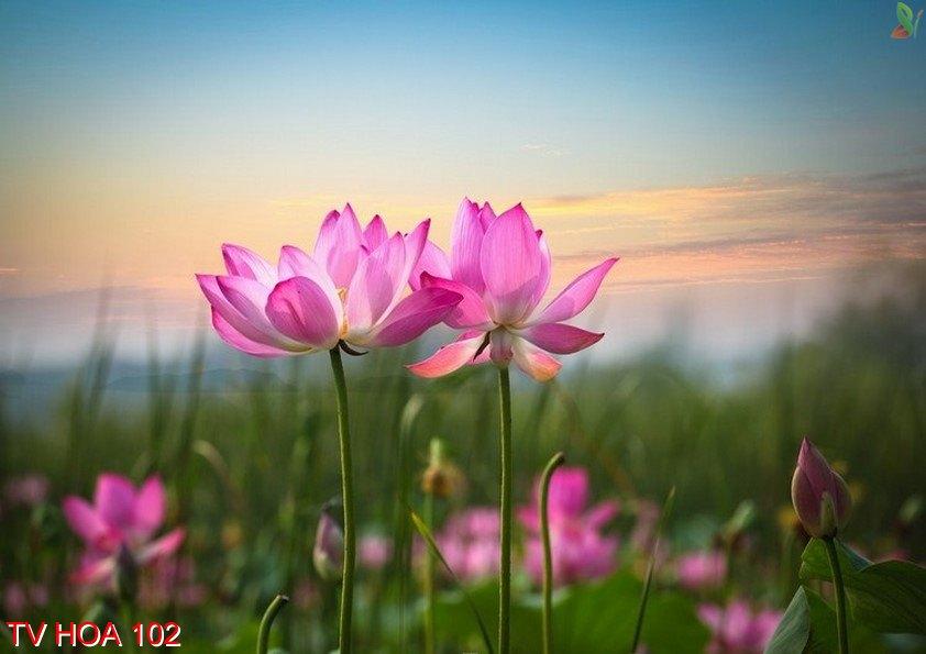 Tranh về hoa 102