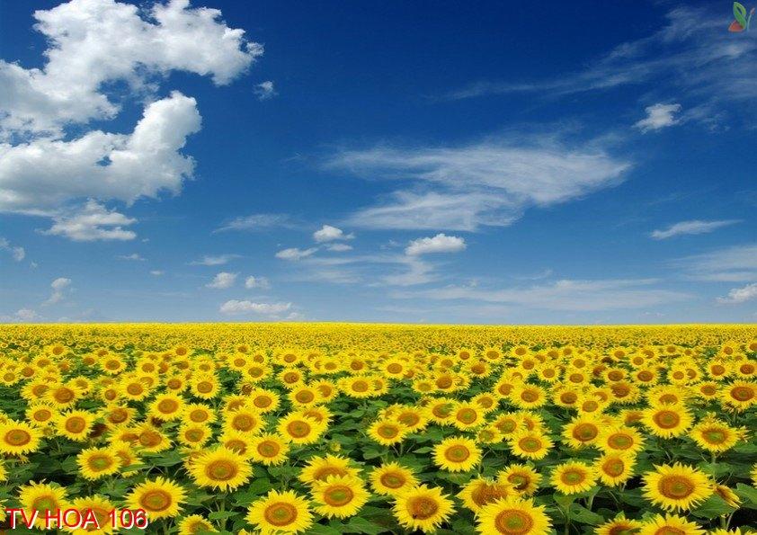Tranh về hoa 106