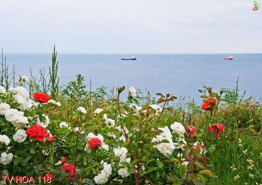 Tranh về hoa 118