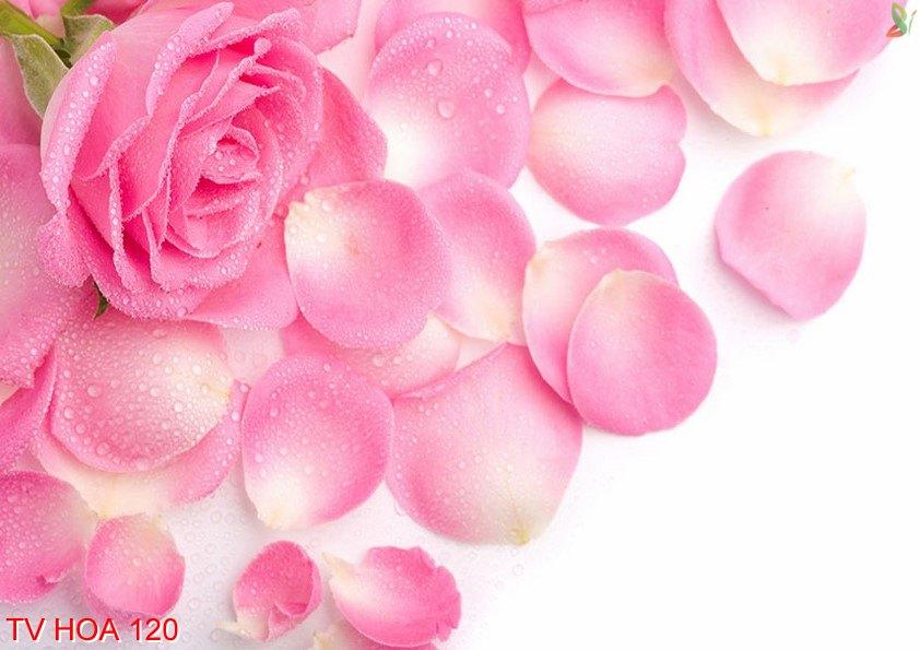 Tranh về hoa 120