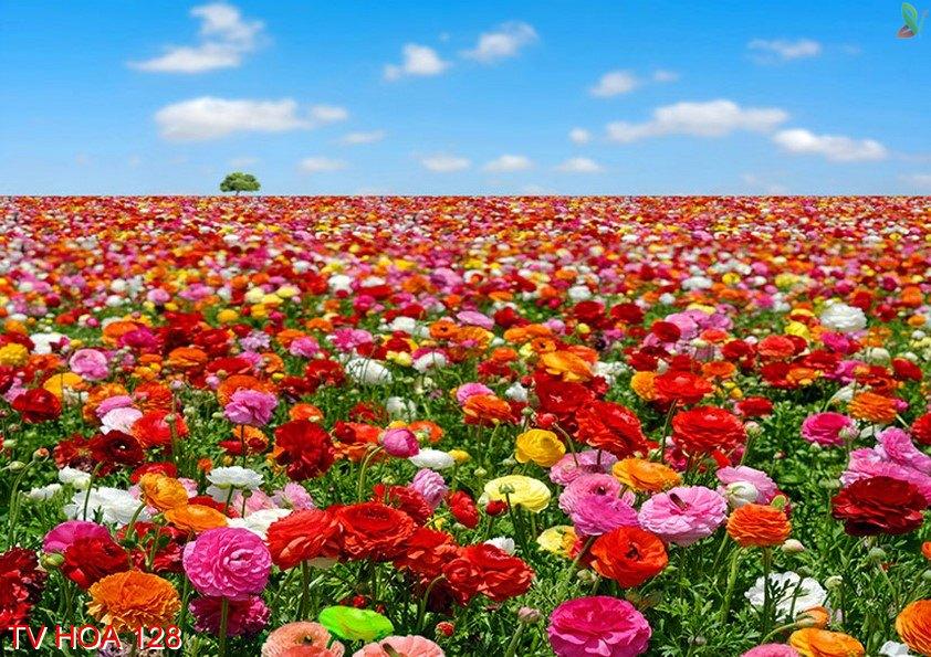Tranh về hoa 128