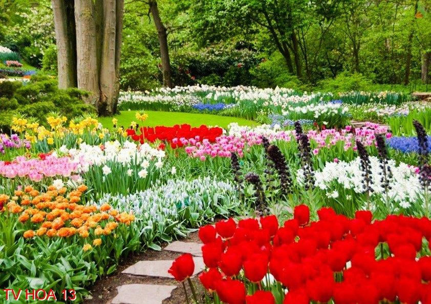 Tranh về hoa 13