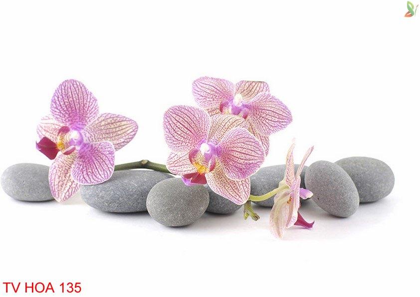 Tranh về hoa 135