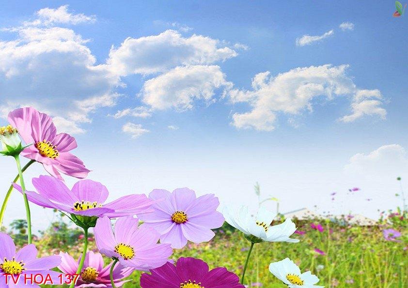Tranh về hoa 137