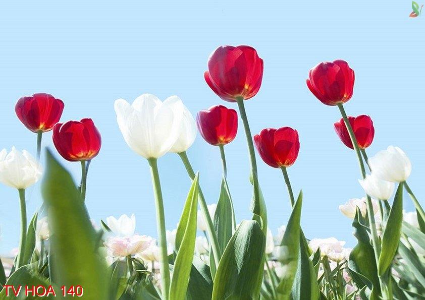 Tranh về hoa 140