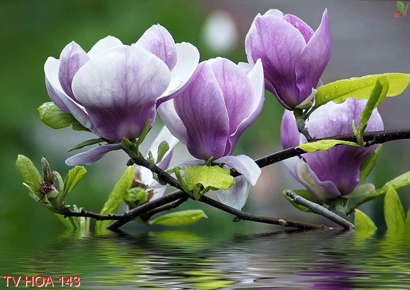 Tranh về hoa 143