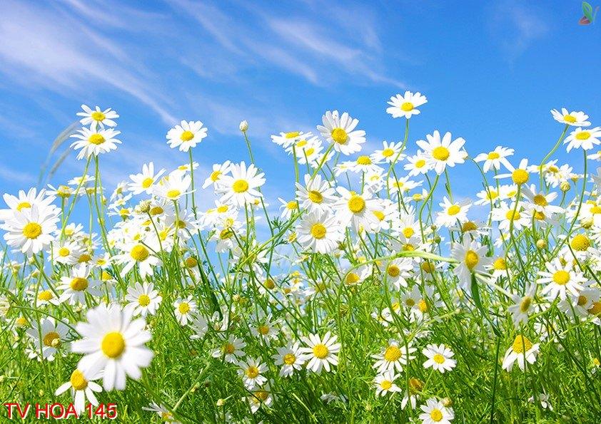 Tranh về hoa 145
