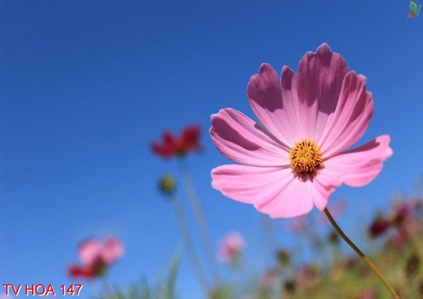 Tranh về hoa 147