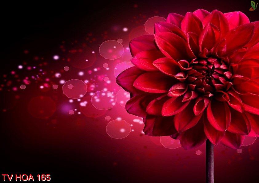 Tranh về hoa 165