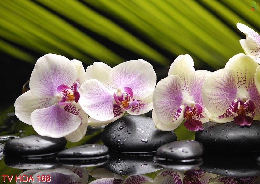 Tranh về hoa 168