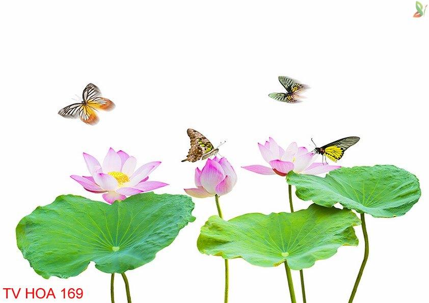 Tranh về hoa 169