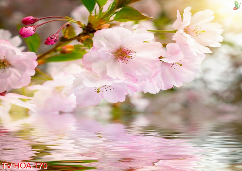 Tranh về hoa 170