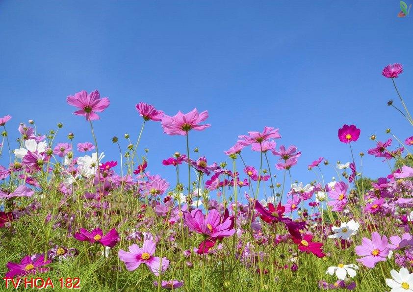 Tranh về hoa 182