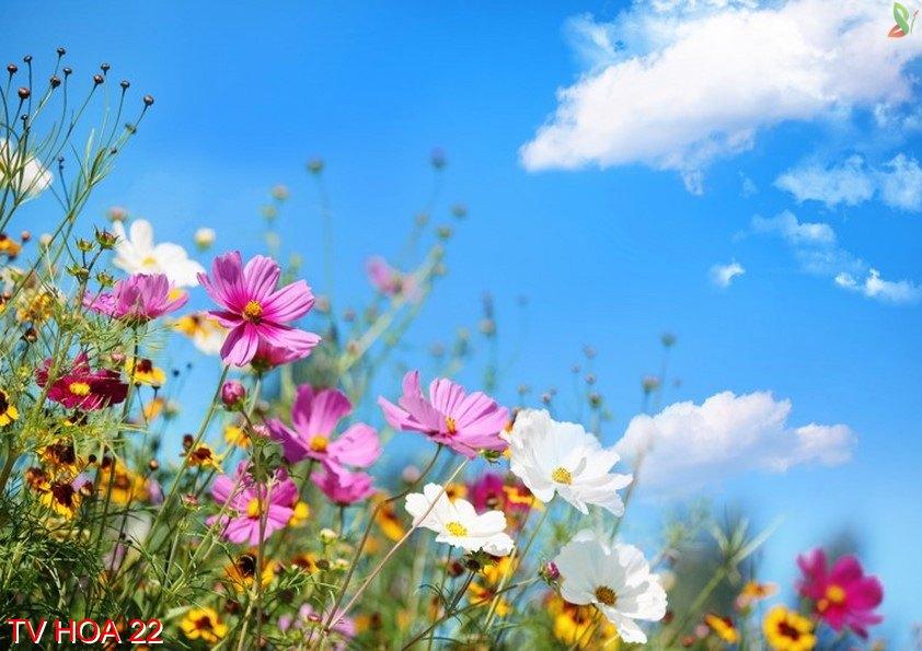 Tranh về hoa 22