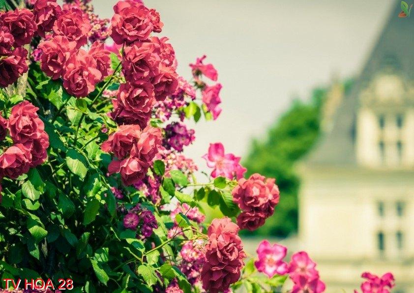 Tranh về hoa 28