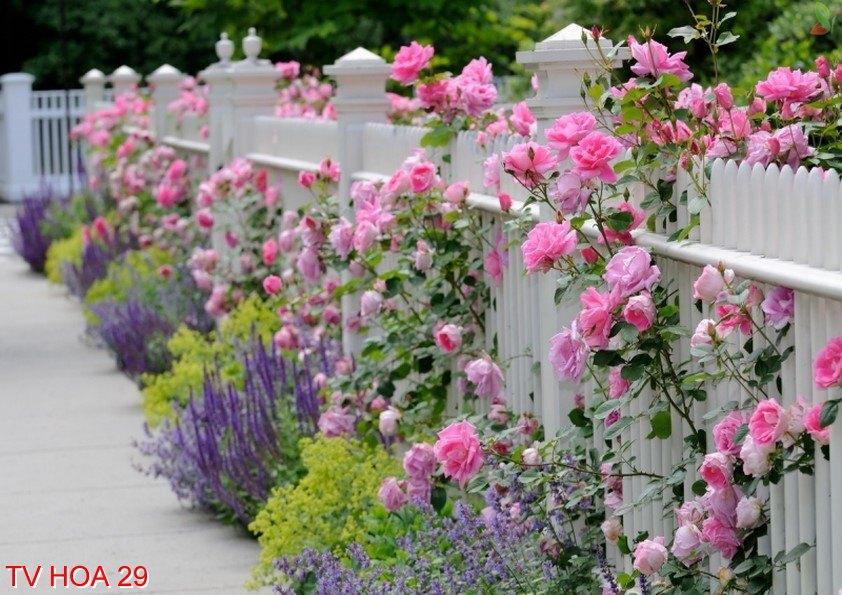 Tranh về hoa 29