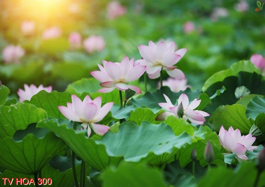 Tranh về hoa 300
