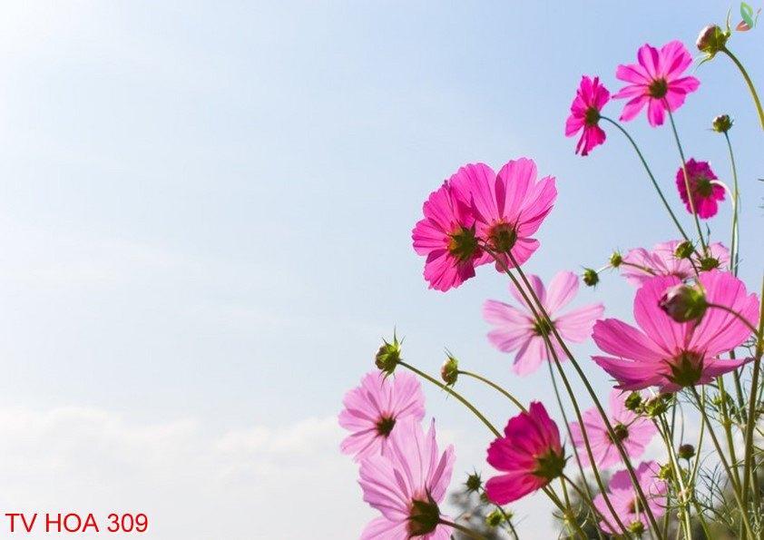 Tranh về hoa 309