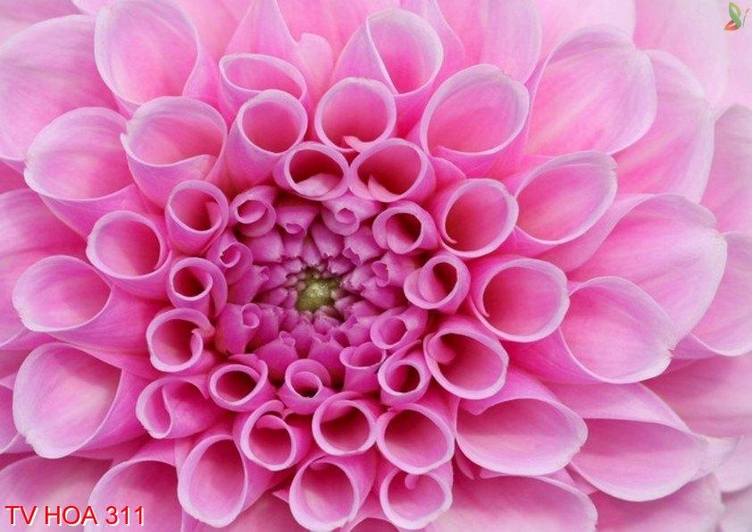 Tranh về hoa 311