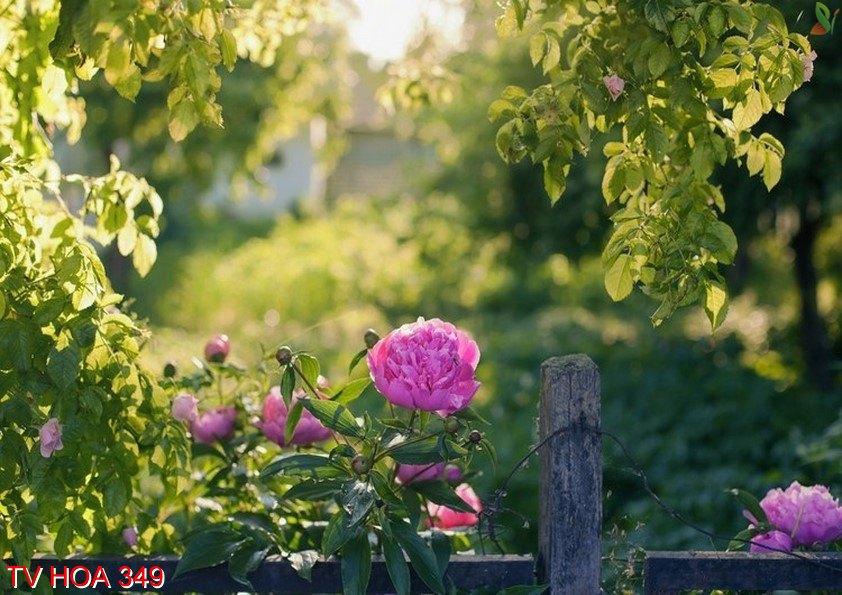Tranh về hoa 349