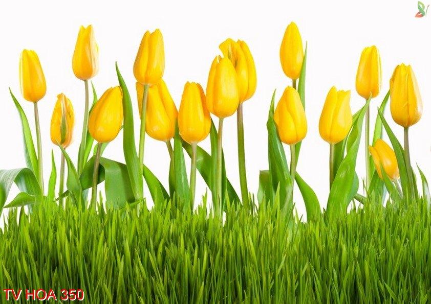Tranh về hoa 350