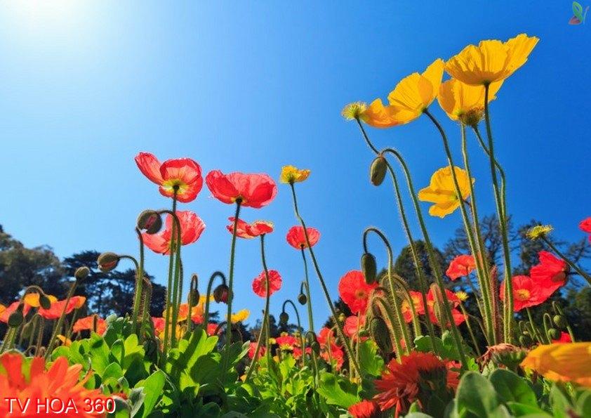 Tranh về hoa 360