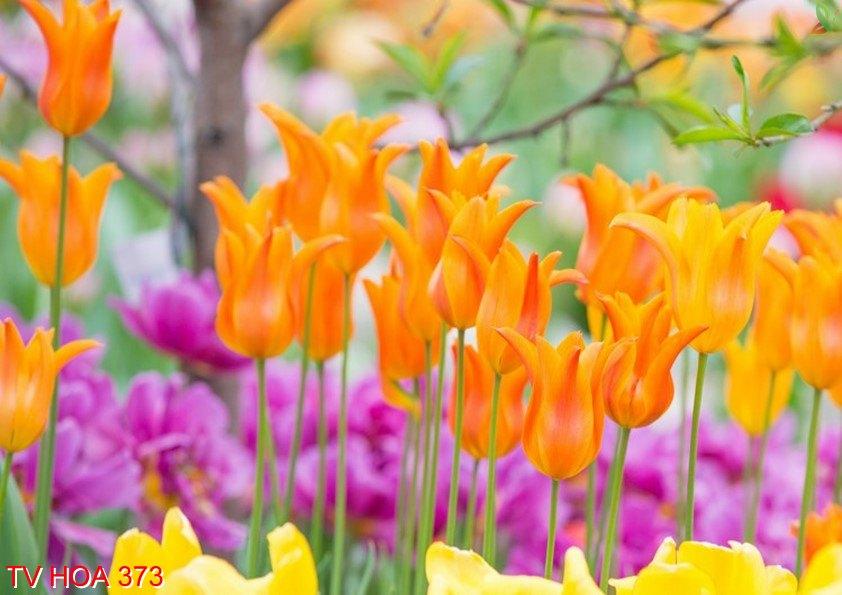 Tranh về hoa 373