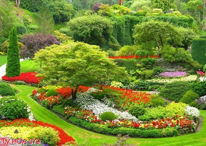 Tranh về hoa 379