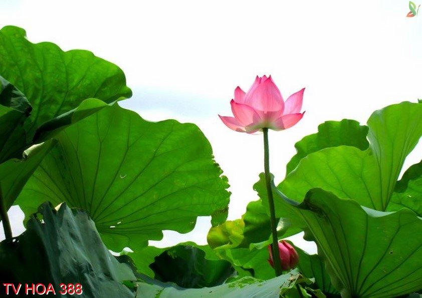Tranh về hoa 388