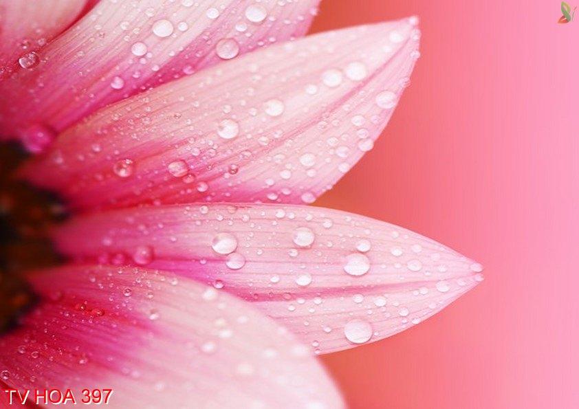 Tranh về hoa 397