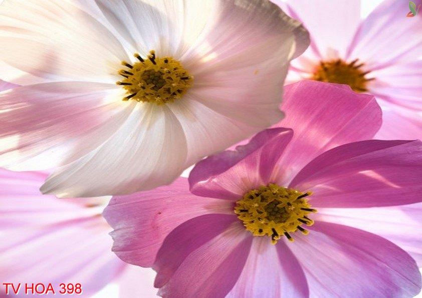 Tranh về hoa 398
