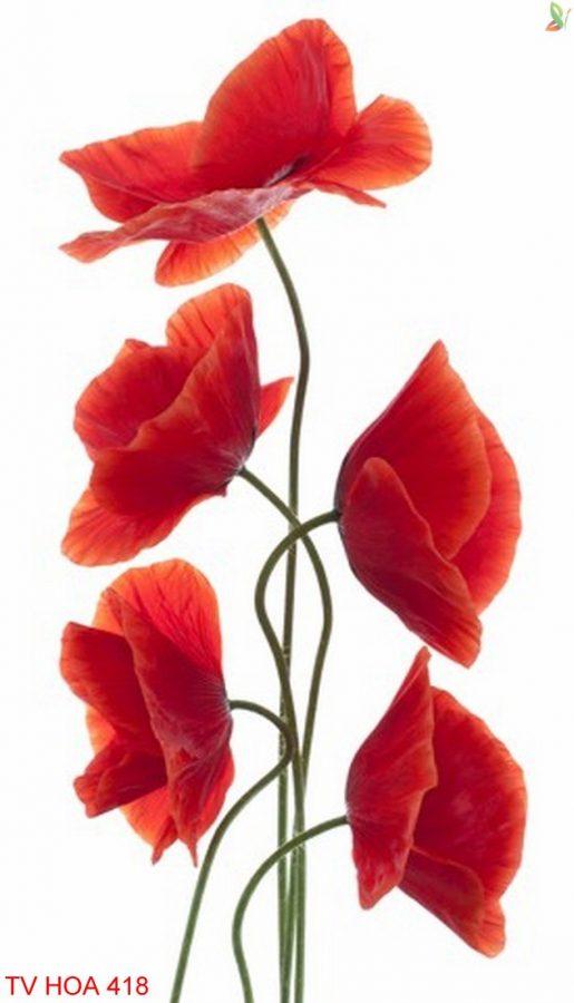 Tranh về hoa 418
