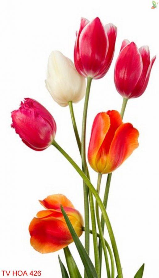 Tranh về hoa 426