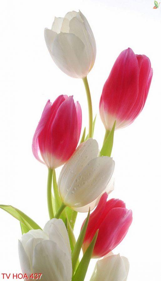 Tranh về hoa 437