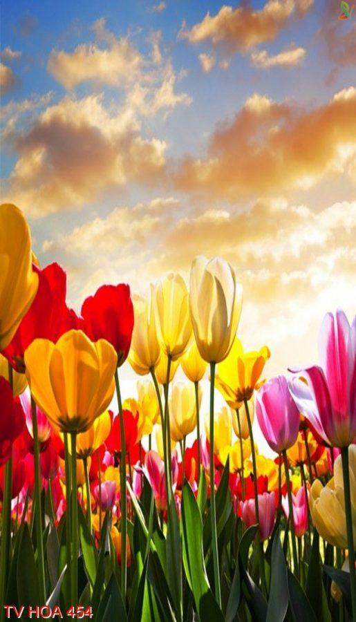 Tranh về hoa 454