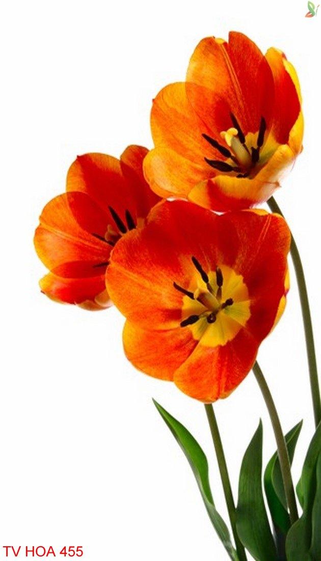 Tranh về hoa 455